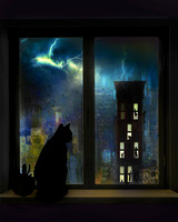 Cats in Windows Series